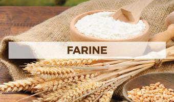 Immagine con diversi tipi di farine senza glutine